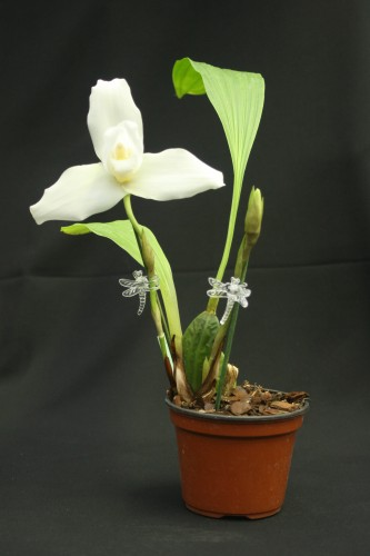 Orchideen-Schmetterlinge